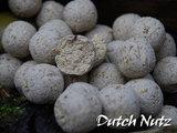 Boilies   Dutch Nutz