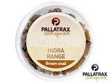 Brown Snails Pallatrax | Bruine Slakken
