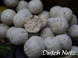 Boilies Bulk Deal | Dutch Nutz 20 mm