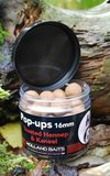 Pop-ups | Toasted Hennep / Kaneel