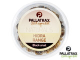 Black Snails Pallatrax | Zwarte Slakken