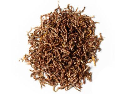 Bloodworm Dried Naturals | Bloedworm